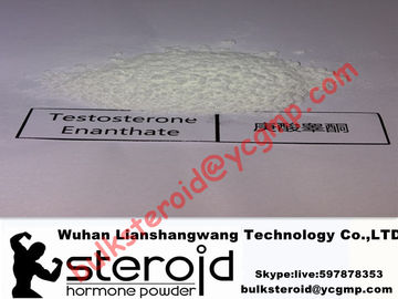 Chiny Healthy Anabolic Seroid White Powder Testosterone Enanthate for Bodybuilding 315-37-7 dostawca